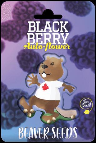 Blackberry AutoFlower Marijuana Seeds