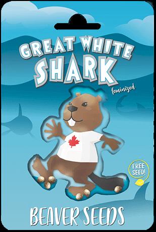 Great White Shark Feminized Marijuana Seeds