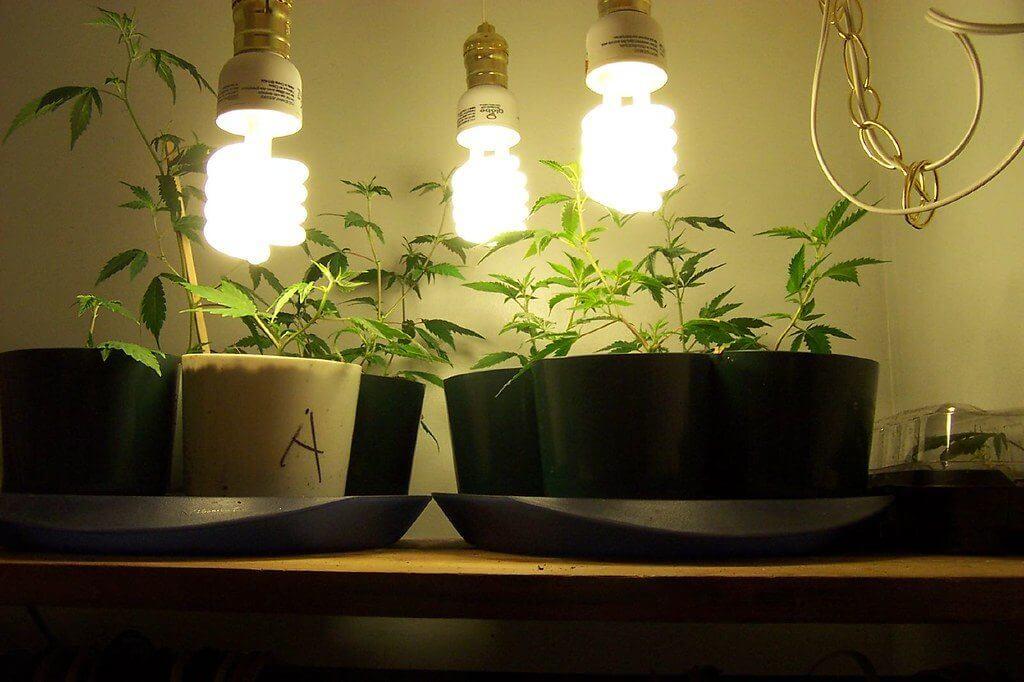 cannabis growing methods