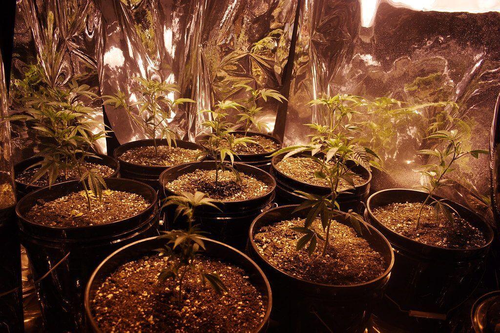 how to grow marijuana in a grow box