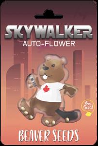 Skywalker Autoflower Marijuana Seeds