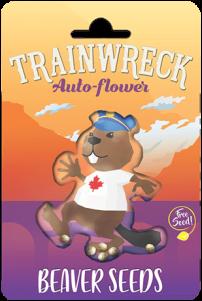 Trainwreck Autoflower Marijuana Seeds