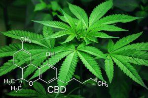 cannabis cbd vs hemp cbd