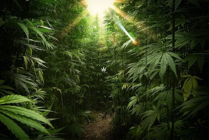 best outdoor strains