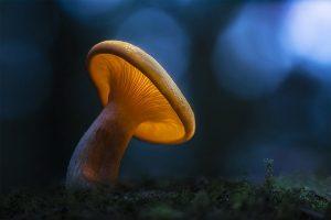 weed and mushrooms
