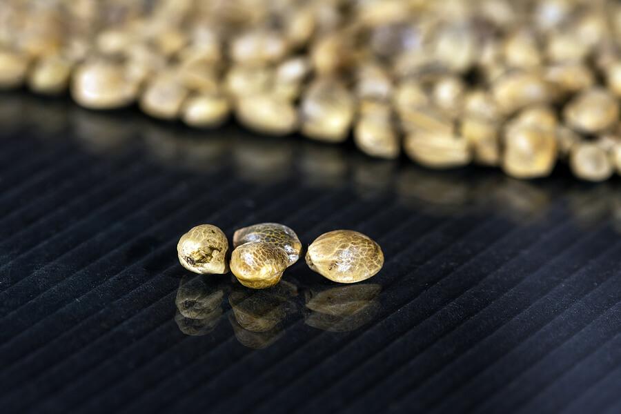 Bigstock Canabis Seeds On Dark Backgrou 338704486 1