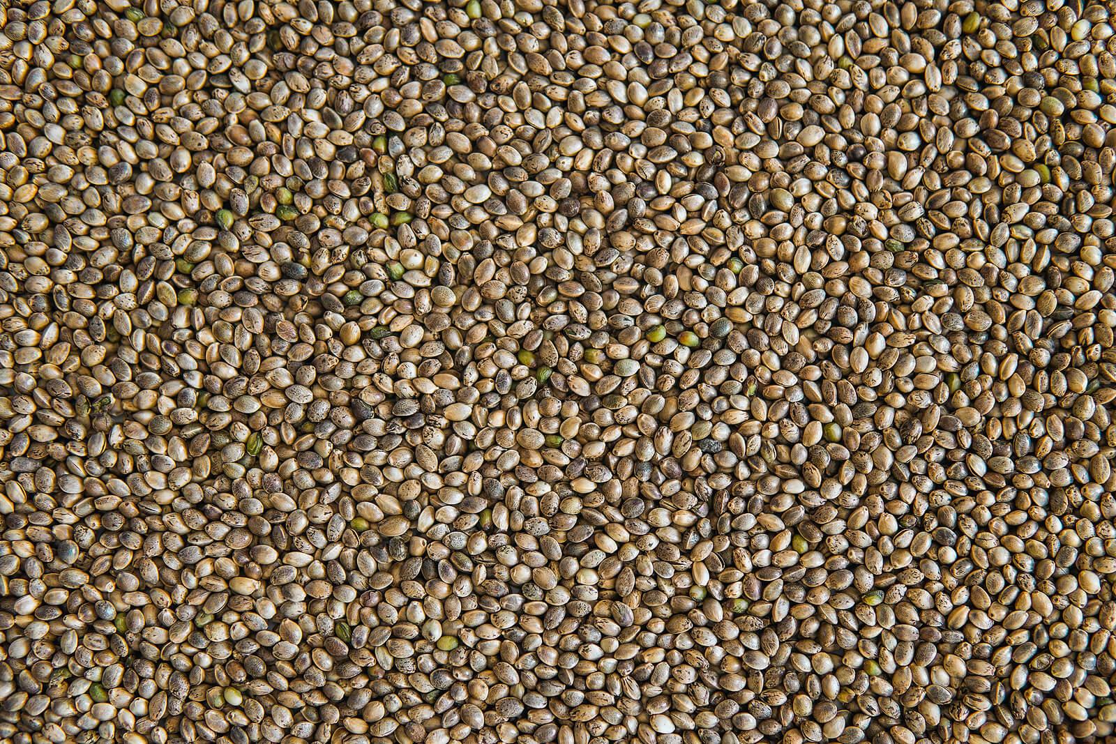 Where To Buy Marijuana Seeds In Kichener