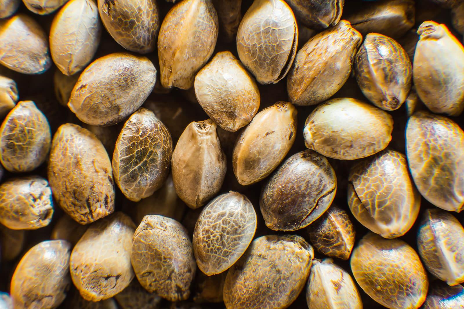 Where To Buy Marijuana Seeds In St. Johns