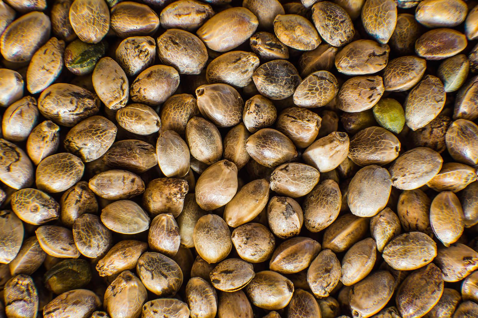 Where To Buy Marijuana Seeds In Windsor