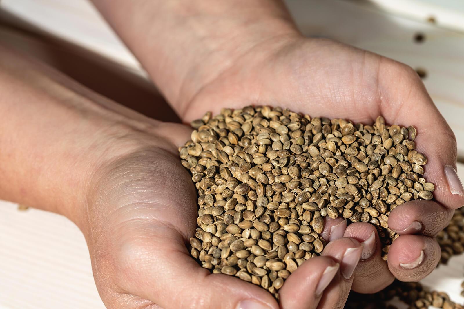 Buy Marijuana Seeds In Casas Adobes