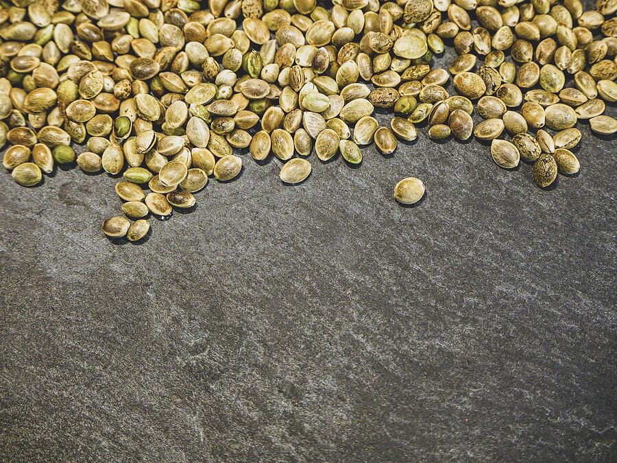 Buy Marijuana Seeds In Memphis