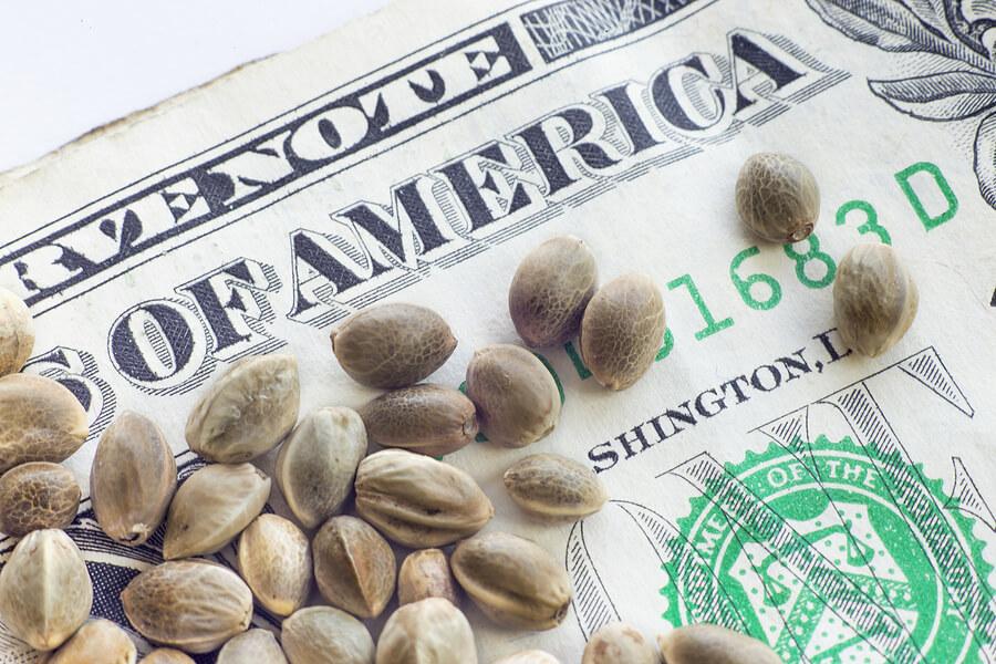 Buy Marijuana Seeds In Phoenix