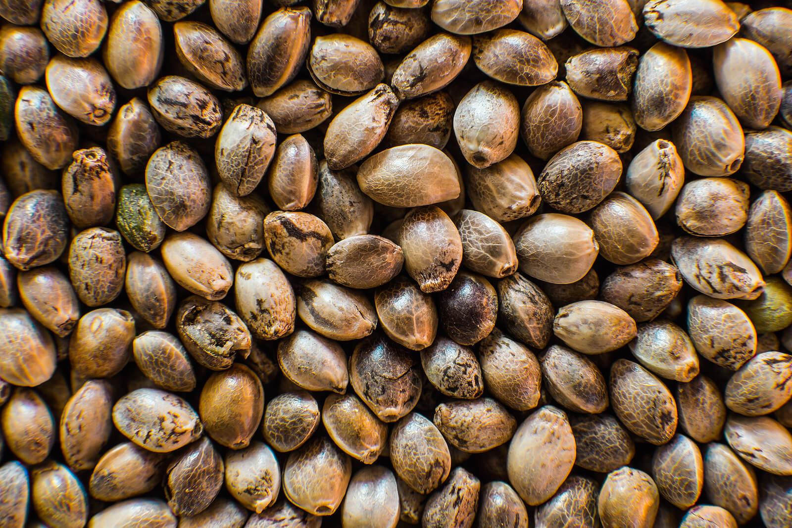 Buy Marijuana Seeds In Richmond