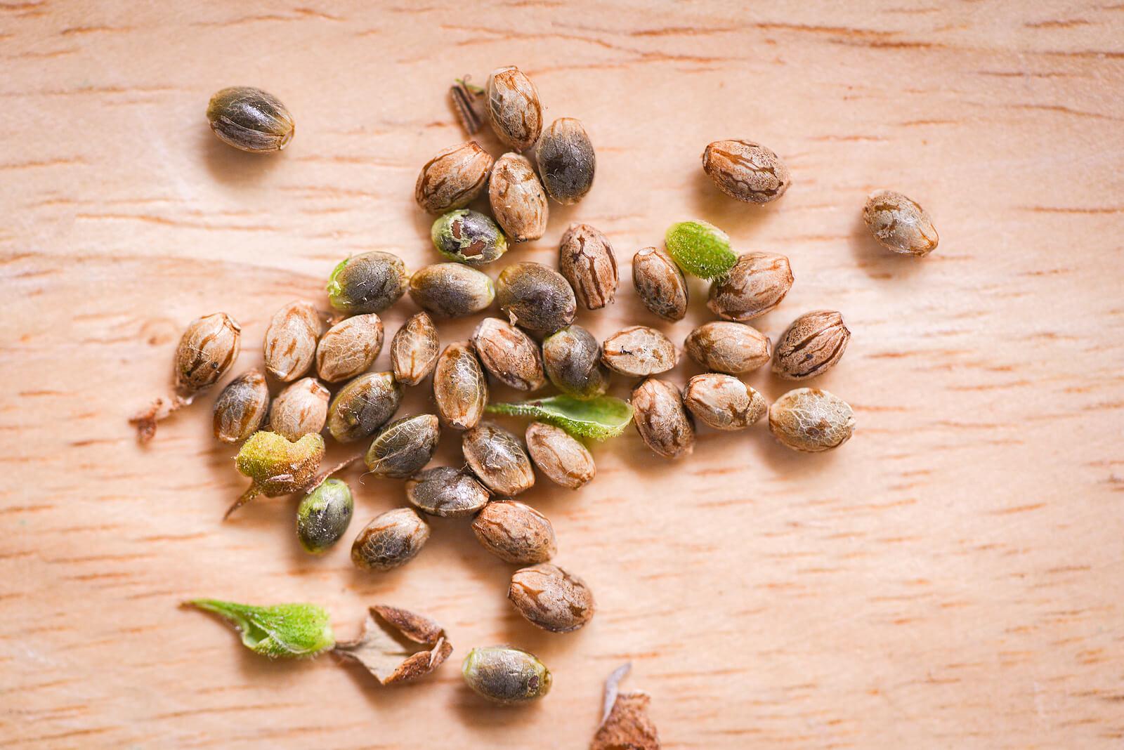 Buy Marijuana Seeds In Camp Verde