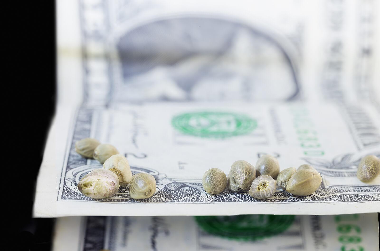 Buy Marijuana Seeds In Carlsbad