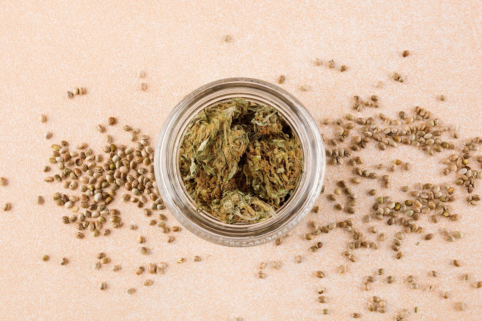 Buy Marijuana Seeds In Gilbert