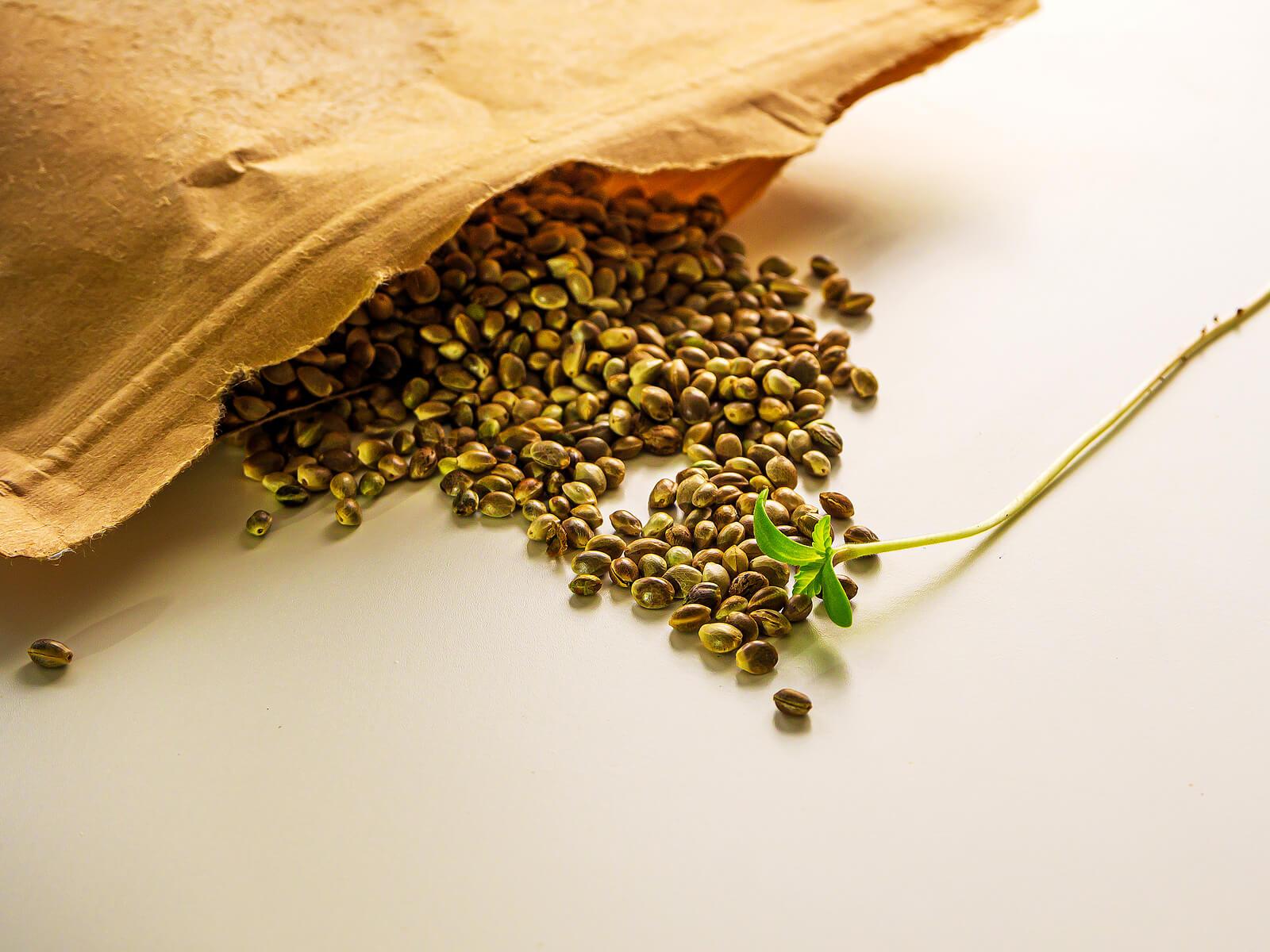 Buy Marijuana Seeds In Tucson
