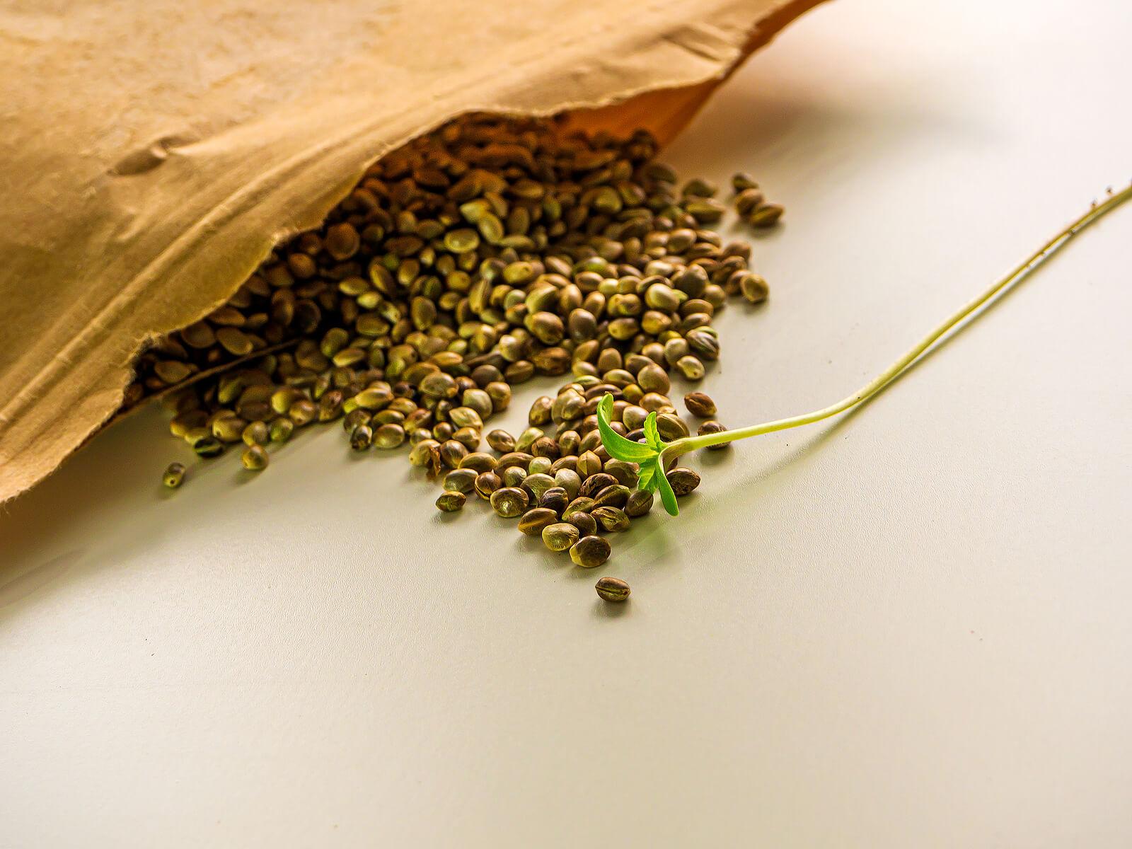 Buy Marijuana Seeds In Crystal Lake