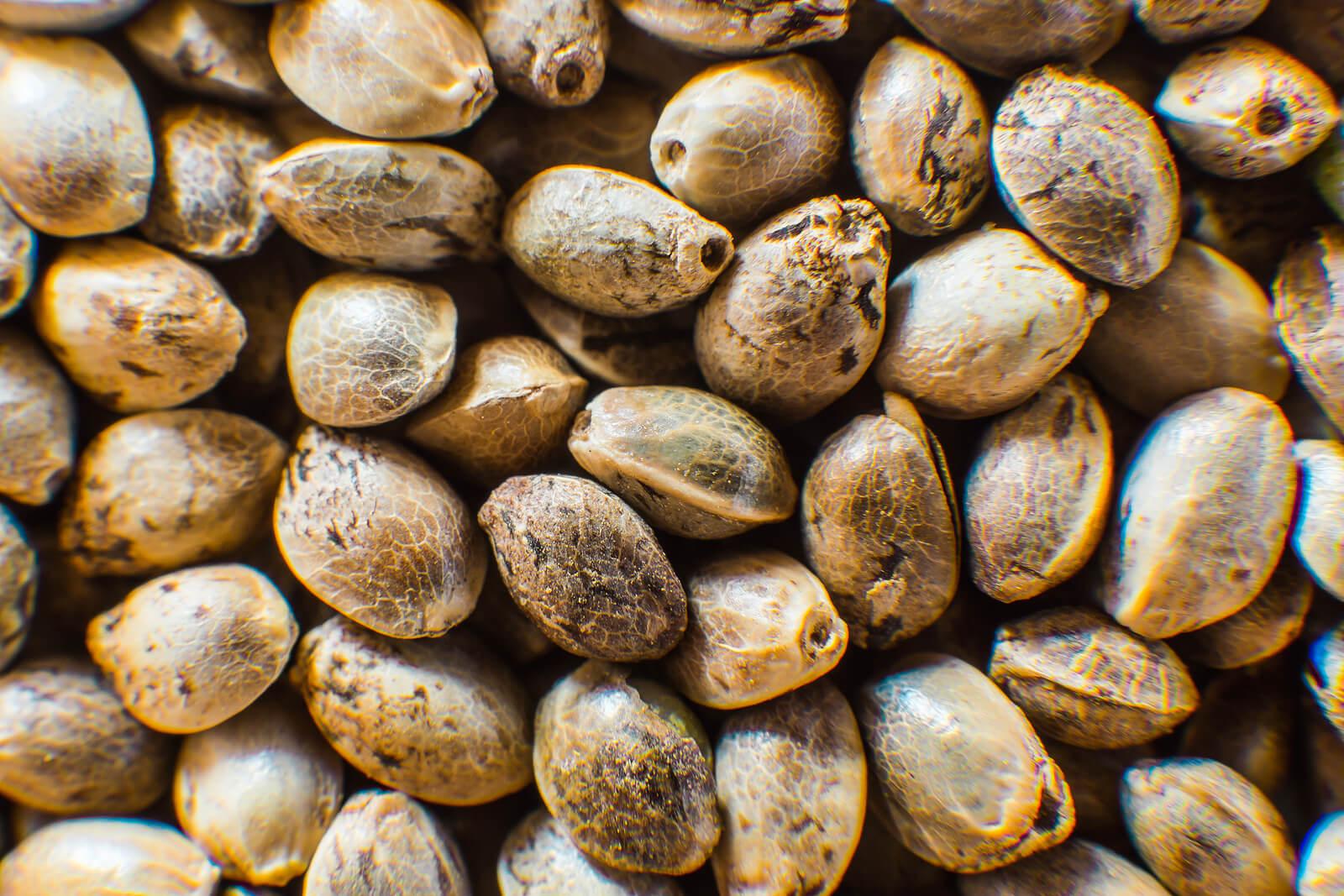 Buy Marijuana Seeds In Ann Arbor