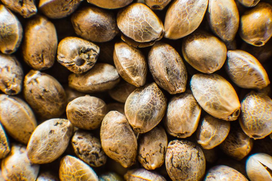 Buy Marijuana Seeds In British Columbia2