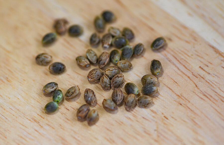 Buy Marijuana Seeds In Manistee