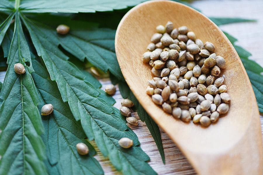 Buy Marijuana Seeds In Taylor