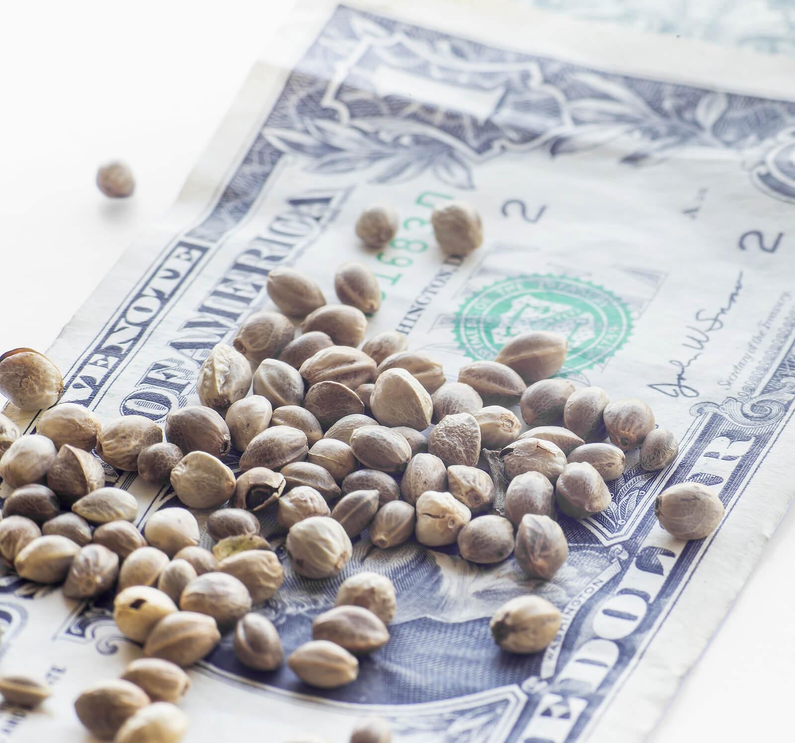 Buy Marijuana Seeds In Texas