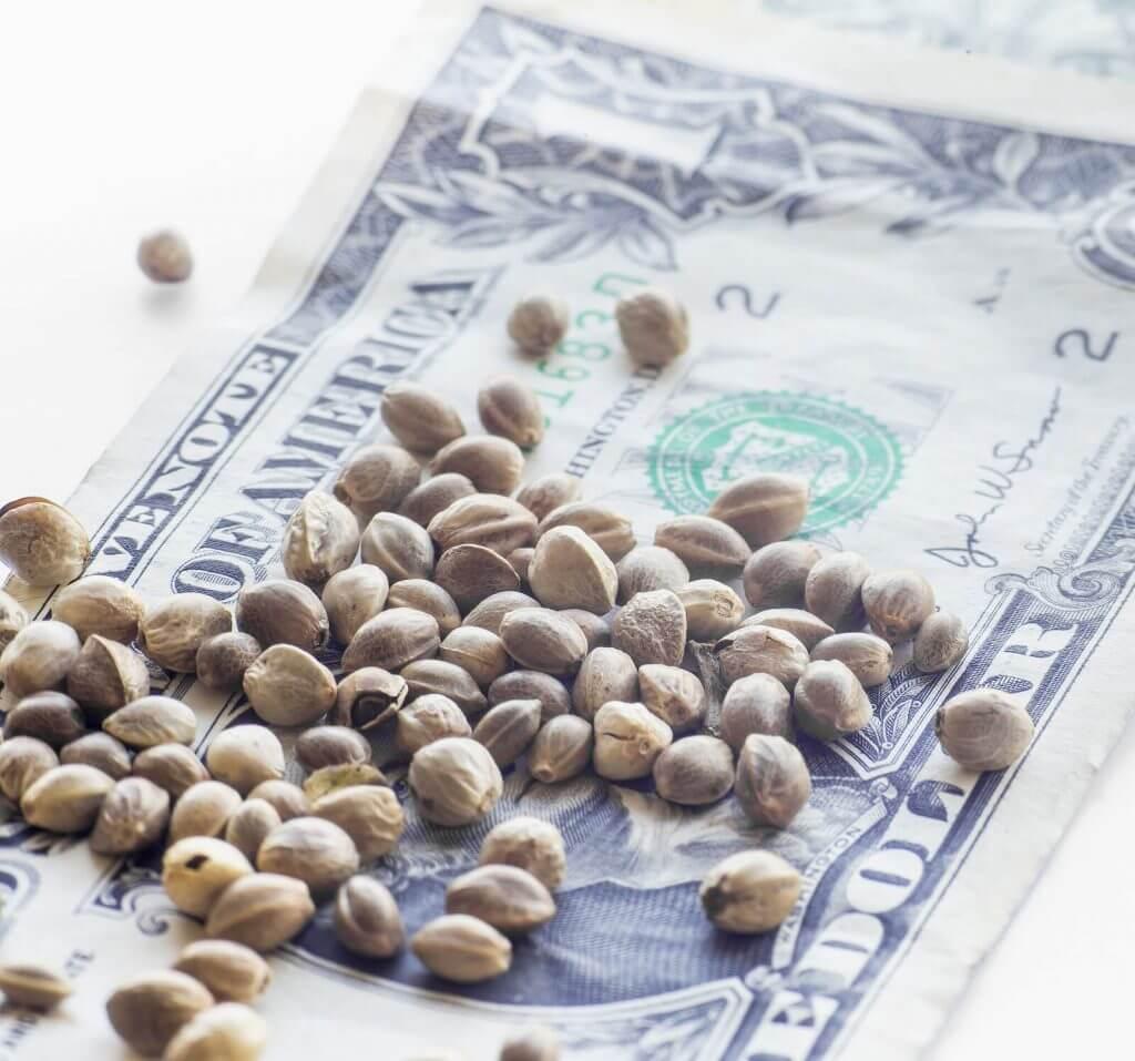 Buy Marijuana Seeds In Wenatchee
