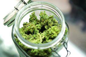 marijuana allergy