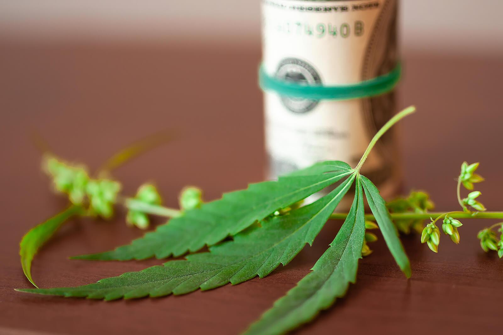 where to buy marijuana seeds in Edmonton